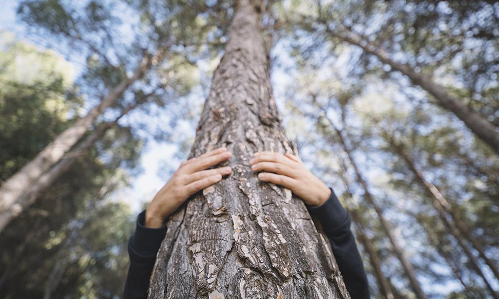 sylvothérapie forêt
