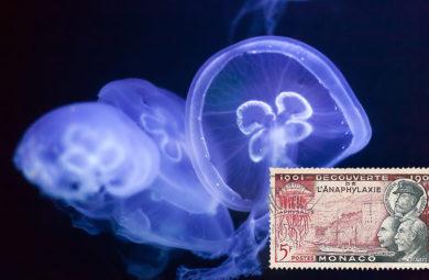 allergie meduse
